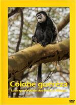 Affiche Le colobe guéréza : Le singe acrobate des forêts d'Afrique