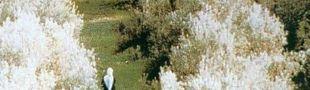 Affiche Au travers des oliviers