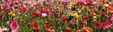 Cover La liste florale
