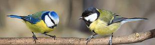 Cover Des noms d'oiseaux